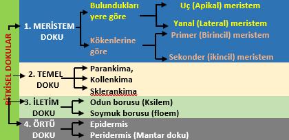 Keten kanalı: temel özellikleri ve özellikleri